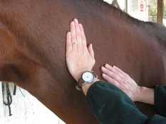 Equinox Equine Massage Therapy